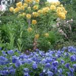 """Blue & Gold"" by PeterRidge"