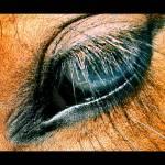 """Blue Eyes"" by ldm"