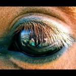 """Brown Eye"" by ldm"