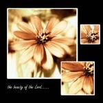 """The Beauty of the Lord"" by PenielDesignsbyLisaGentry"
