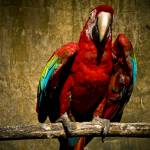 """Parrot at the Zoo"" by Cody_00_XJ"