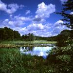 """white pine bog"" by RichardBaumer"