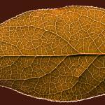 """""""Leaf"""" by Ed-X"""