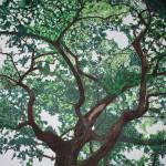 """Oak"" by annaeisenberg"