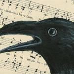 """""""Corvus Chorus"""" by albinocrow"""