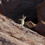 """Bunny Behind"" by taryneast"