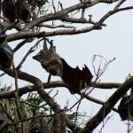 """""""Bats"""" by taryneast"""