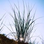"""Sun Shrub"" by timhines"