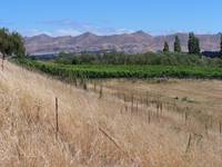 Waipara Vineyard