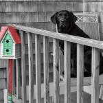 """""""Play Time is Officially Over"""" by CapeCodCyclist"""