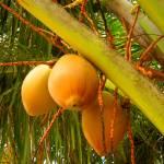 """orange"" by tessarosephotos"