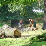 """""""Loggers At Work  (13853-RD)"""" by rodjohnson"""