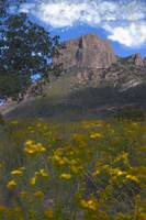 Mountain Sky and Yellow Flowers