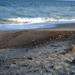 """Edisto Shore"" by JaZilla"