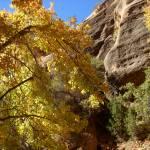 """""""Fall in Zion"""" by zackadams"""