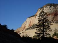 Tree silhouette in Zion