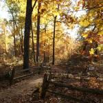 """""""Autumn Path"""" by Darrin"""