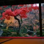 """Japanese maple, Kodai-ji, Tokyo, Japan"" by RaphaelBickPhotography"