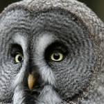 """""""Owl"""" by katiko"""