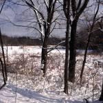 """""""white pine bog winter"""" by RichardBaumer"""