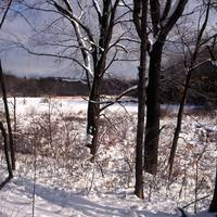 white pine bog winter
