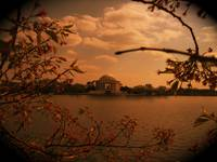 Jefferson Memorial thru Cherry Blossoms
