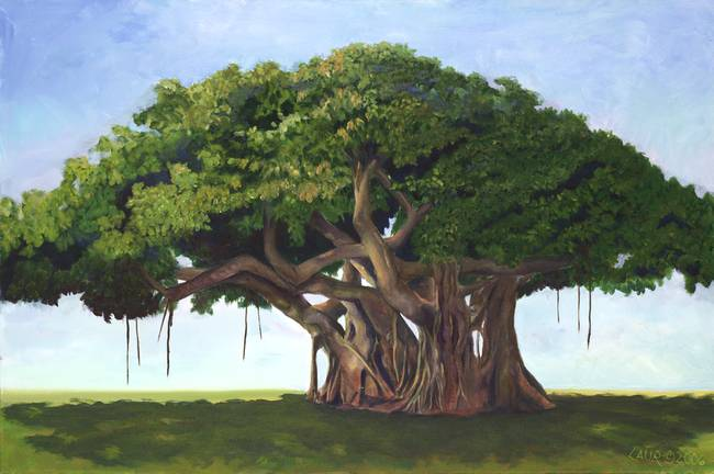 stunning banyan tree artwork for sale on fine art prints. Black Bedroom Furniture Sets. Home Design Ideas