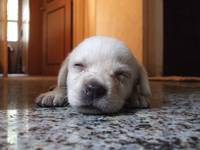 Innocent Sleeping Puppy...