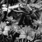 """""""A GARDEN FAE HEALING BW"""" by NaturePlusStudios"""