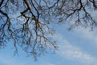 Blue skies and branches