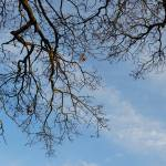 """Blue skies and branches"" by Courtney_Louise"