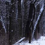 """taylorsville winter path panoramic"" by RichardBaumer"