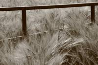 Gateway to the Wheat Field