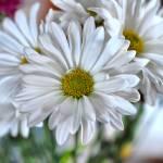 """""""flower"""" by espn21"""