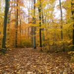 """Autumn Stroll in Sapsucker Woods"" by MichaelStephenWills"