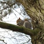"""Squirrel"" by jadiz_89"