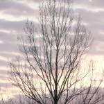 """""""Tree in a purple  winters dawn"""" by WTrimblesArt"""