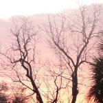 """Trees at sunrise"" by WTrimblesArt"