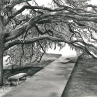 The Century Tree at Texas A&M Art Prints & Posters by Crystal Bosse