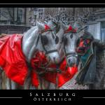 """Salzburg Horses"" by NewDimensionFilms"