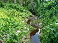 Tranquil Stream in a Green Ravine