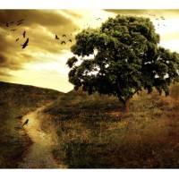 October Crow Art Prints & Posters by Carmen Cordelia