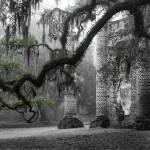 """Oak Limb at Old Sheldon Church"" by Hansen"