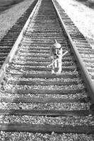 Boxer with stick on traintracks