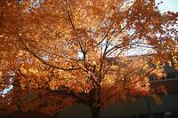 Other Fall Pics 013