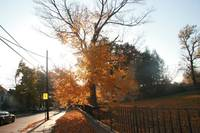Other Fall Pics 020