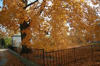 Other Fall Pics 016