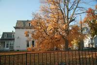 Other Fall Pics 023