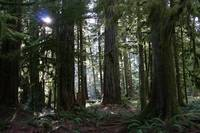 Cathedral Grove, McMillan Provincial Park