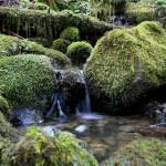 """Clayoquot Sound Rainforest"" by bluepenguin"